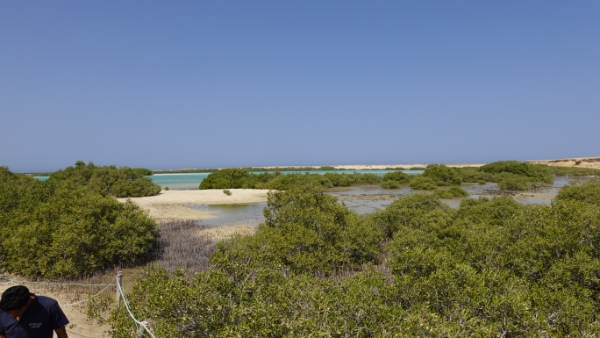 egypte-rondreis_safari-in-africa_mangrove_01