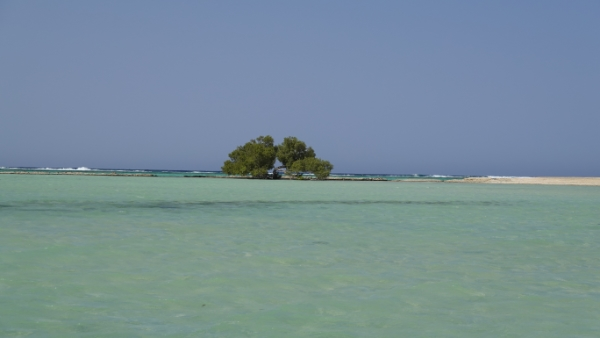 egypte-rondreis_safari-in-africa_mangrove_02