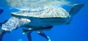 egypte-rondreis_safari-in-africa_snorkeltour_10