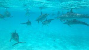 egypte-rondreis_safari-in-africa_snorkeltour_7