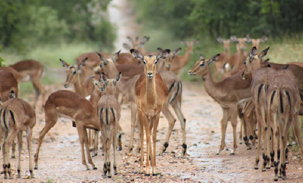 safari-in-kenia-fotografie_01