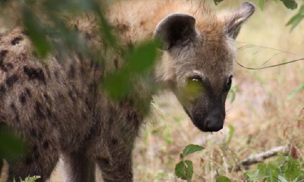safari-in-kenia-fotografie_02