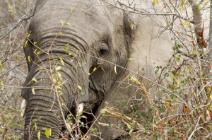 safari-in-kenia-fotografie_03