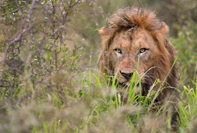 safari-in-kenia-fotografie_09