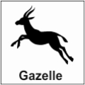 safari-in-kenia-gazelle
