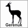 safari-in-kenia-gerenuk