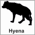 safari-in-kenia-hyena