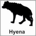 safari-in-kenia-hyena