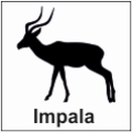 safari-in-kenia-impala