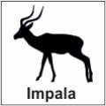 safari-in-kenia-impala