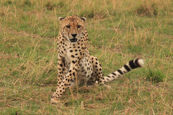 Tanzania: 8 dagen Adventure Migration Safari
