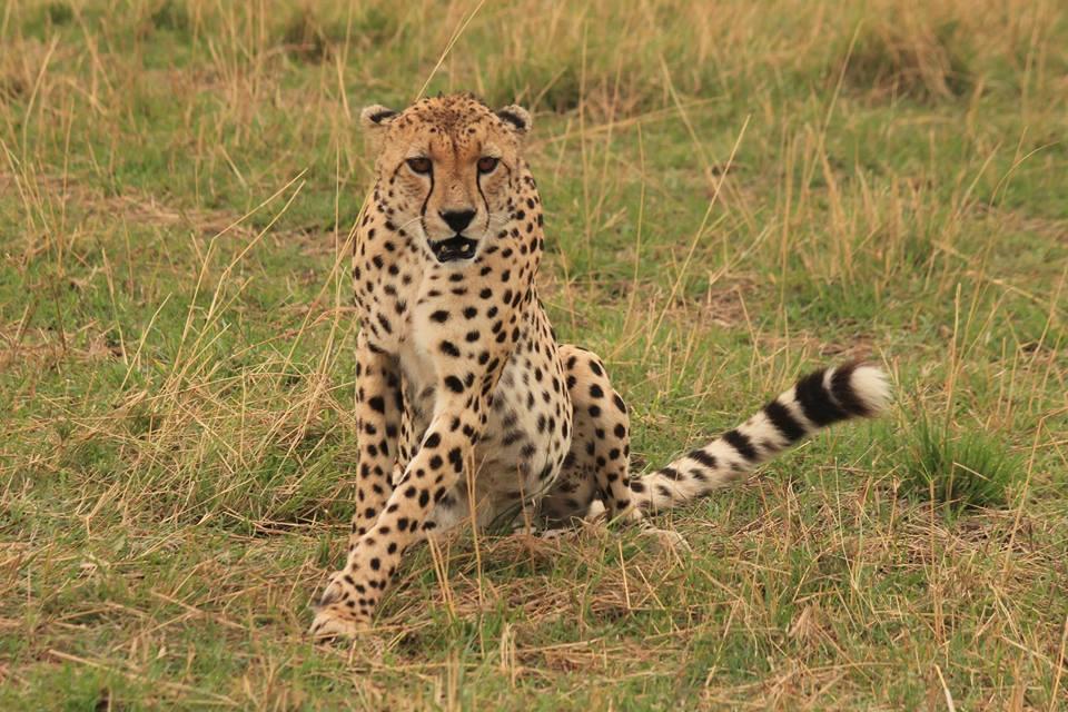 Tanzania: 8 dagen Adventure Migration Safari (P7)