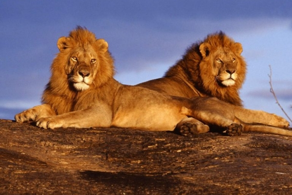 Kenia: 2 dagen Safari Tsavo East & Taita Hills (M4)