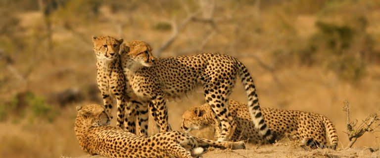 masai-mara-jactluipaarden-768x492