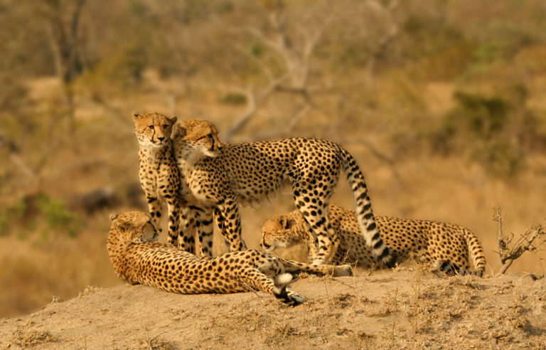 Kenia: 6 dagen Tsavo & Amboseli Safari (M16)