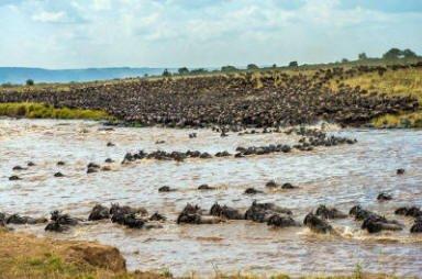 safari-in-kenia-masai_mara_game_reserve_1