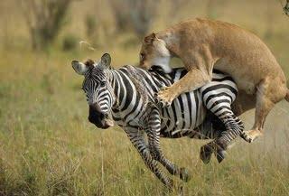 masai_mara_game_reserve_5