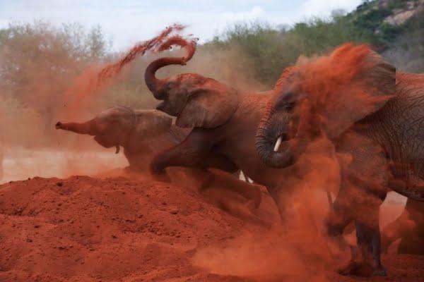 Kenia: 2 dagen Tsavo Red Elephants Safari