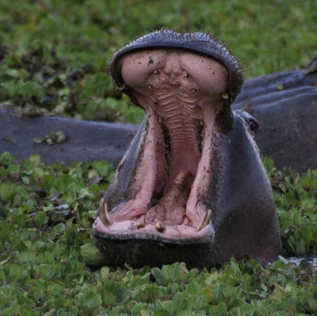 safari-in-kenia-niet-uitstappen