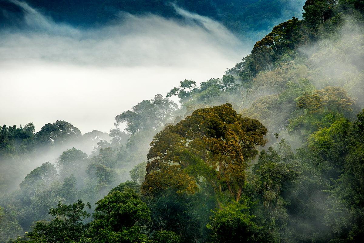 safari-in-rwanda_nyungwe-forest_02