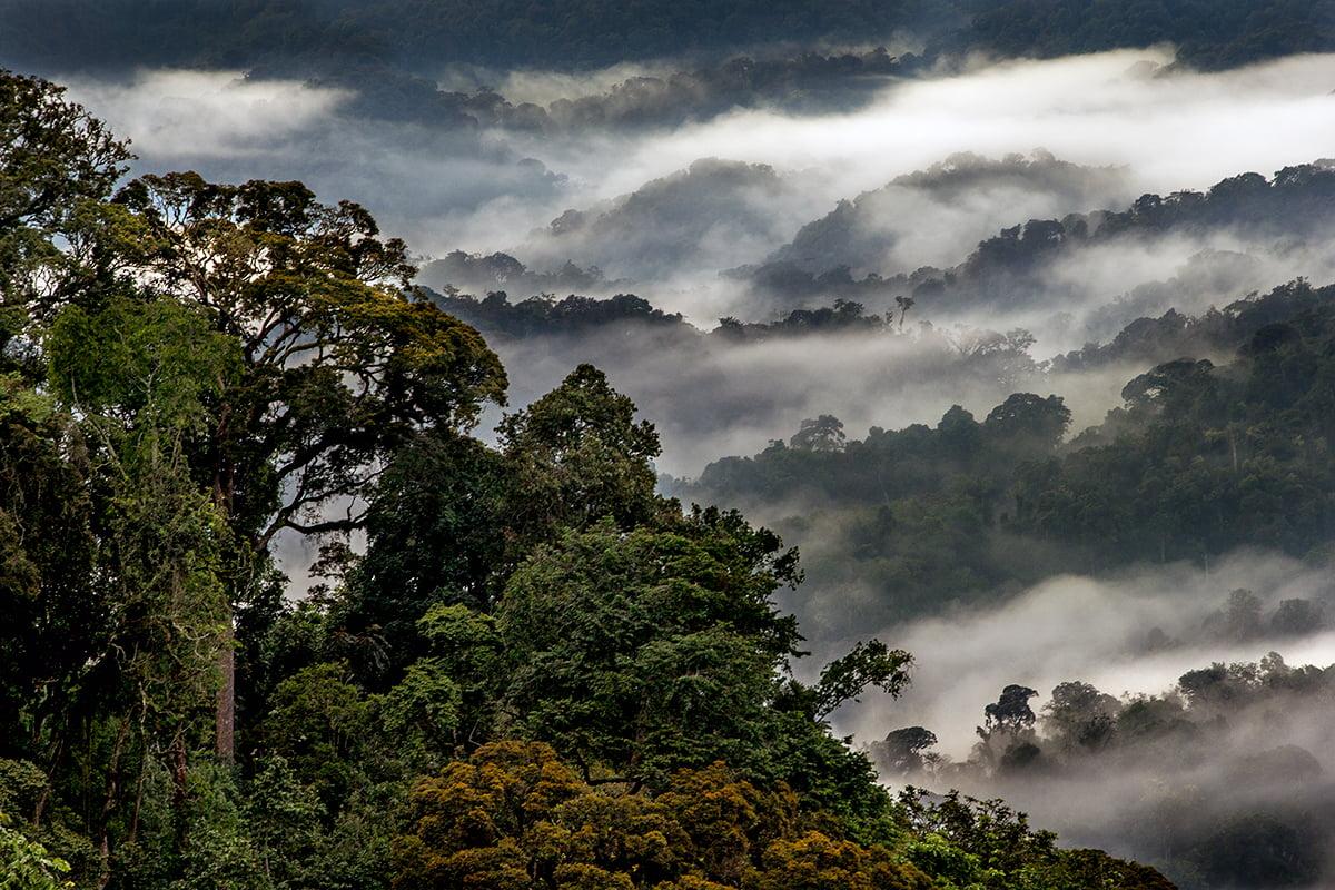 safari-in-rwanda_nyungwe-forest_04