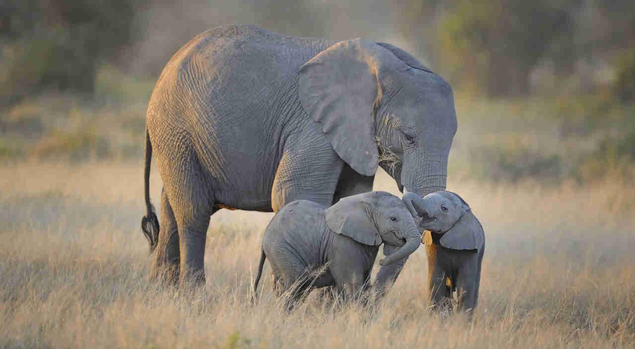 safari-in-kenia-olifant-met-jong