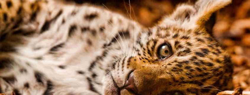 safari-in-kenia-garantiefonds
