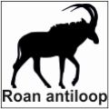safari-in-kenia-roan-antiloop
