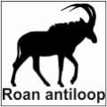 safari-in-kenia-roan-antiloop