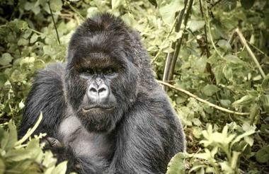 safari-in-rwanda_sabyinyo_01