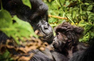 safari-in-rwanda_sabyinyo_02