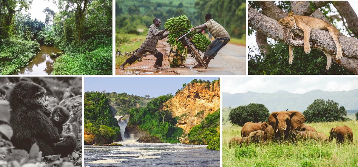 safari-Uganda-multi-portrait