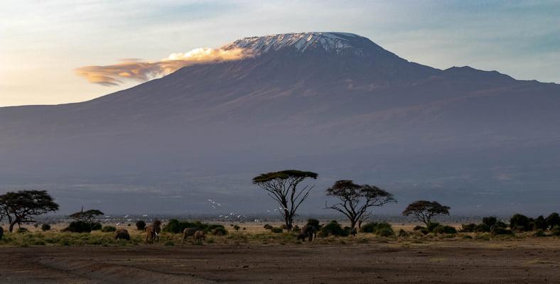 safari-in-afrika_kilimanjaro_03
