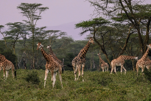 safari-in-afrika_nakuru-03