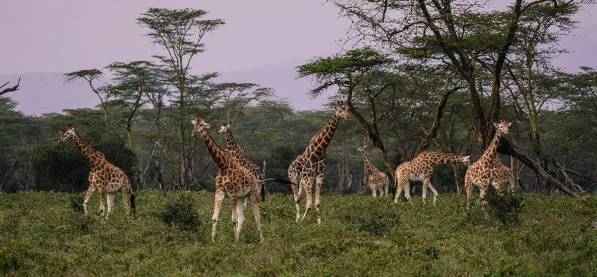 safari-in-afrika_nakuru-03