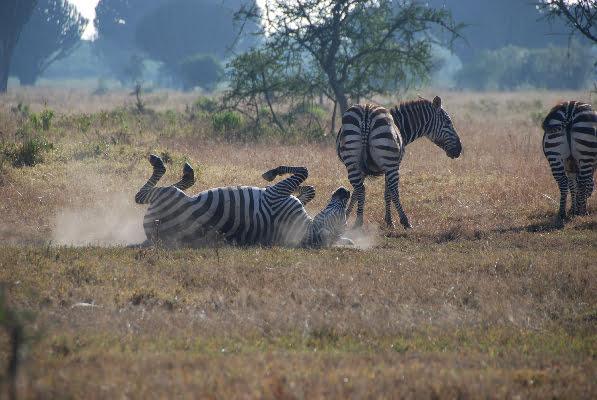 safari-in-afrika_nakuru_04