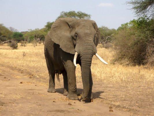safari-in-afrika_olifant_02