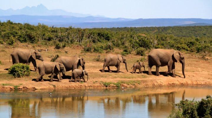 safari-in-afrika_olifanten_03