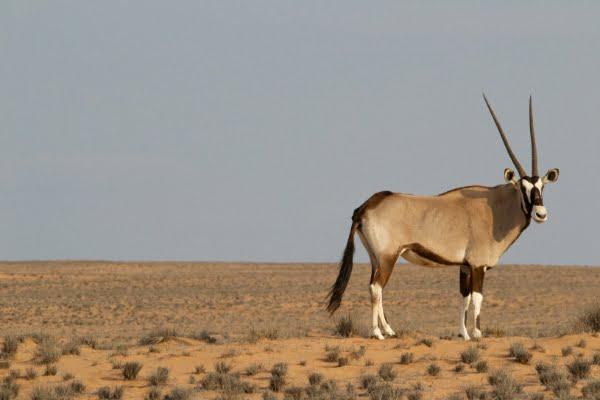 safari-in-afrika_onyx_01