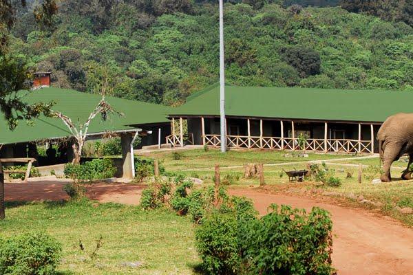 Rhino Lodge @Ngorongoro