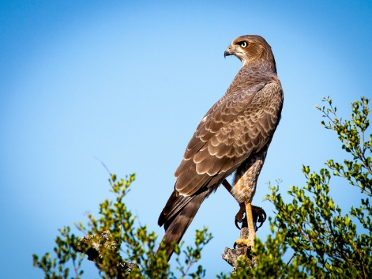 safari-in-afrika_vogels-valk
