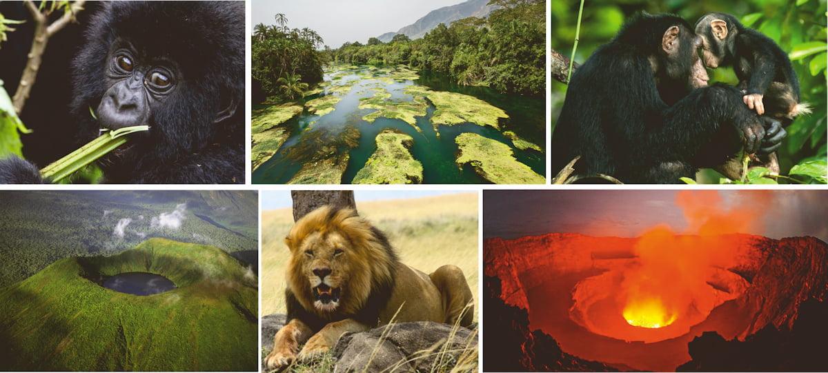 safari-in-congo-multi-portrait