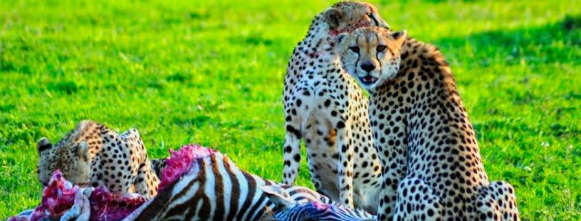 safari-in-kenia-amboseli-national-park-02