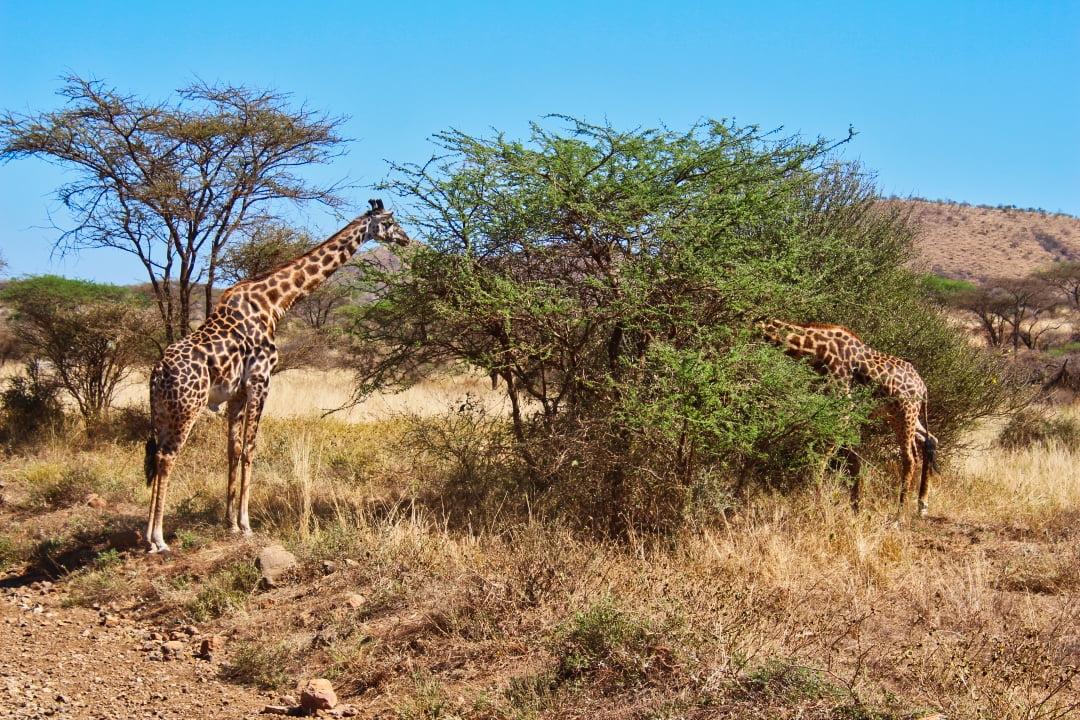 safari-in-kenia-amboseli-national-park-05