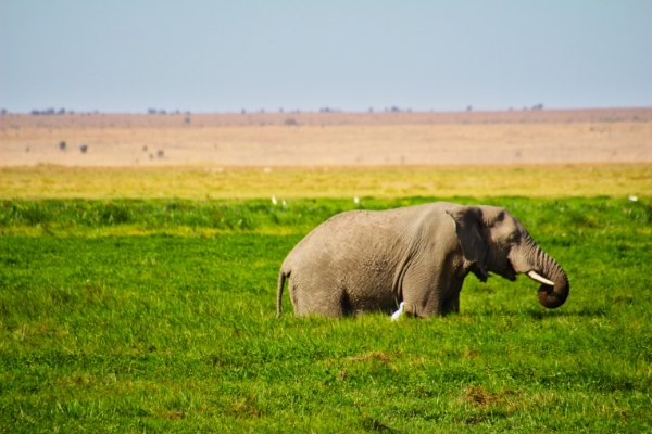 safari-in-kenia-amboseli-national-park-06