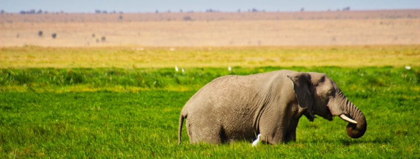 safari-in-kenia-amboseli-national-park-06