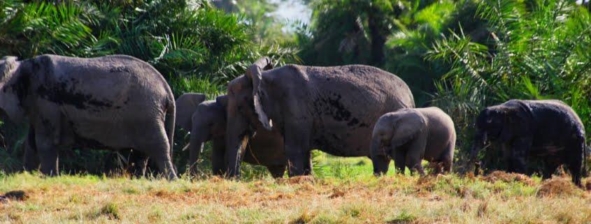 safari-in-kenia-amboseli-national-park-08