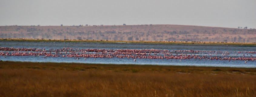 safari-in-kenia-amboseli-national-park-09