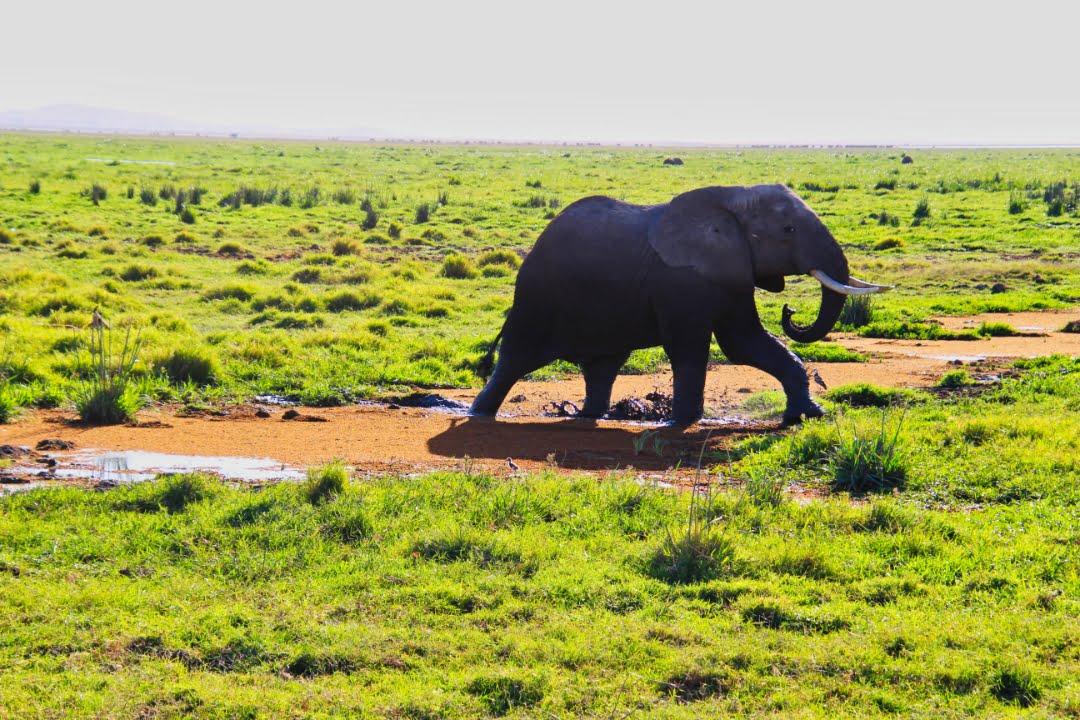 safari-in-kenia-amboseli-national-park-11