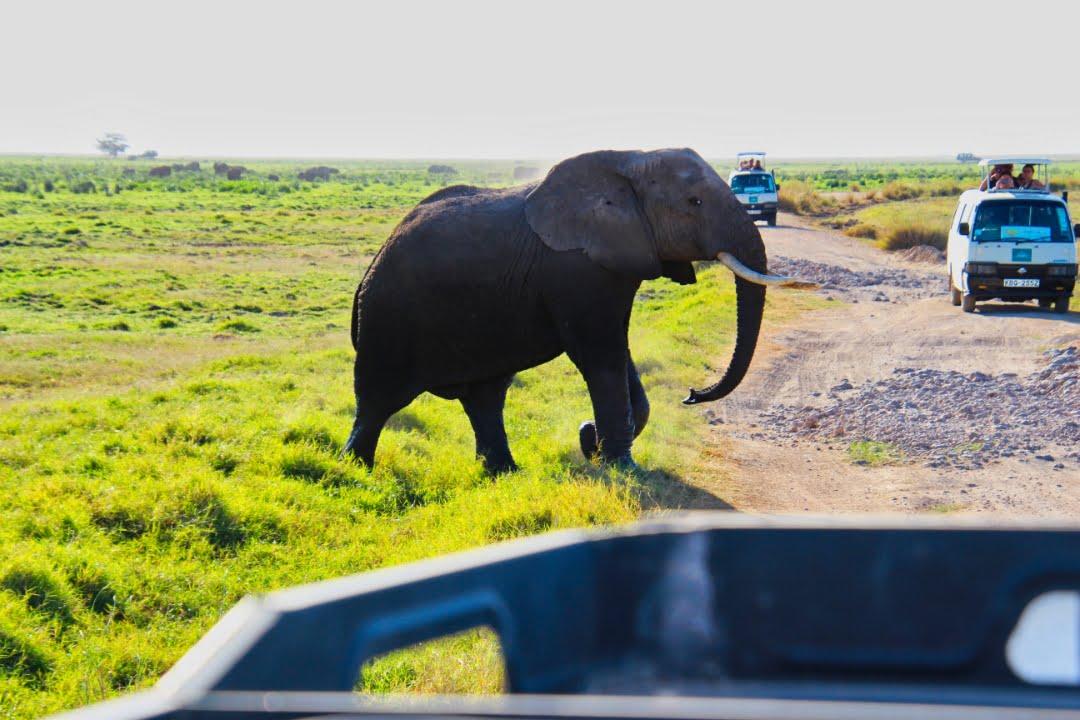 safari-in-kenia-amboseli-national-park-12